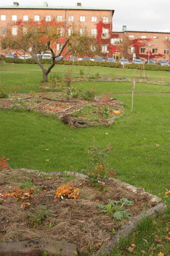 Skogsträdgården i Frescati är anlagd av förra sommarens studenter på kursen i stadsodling.