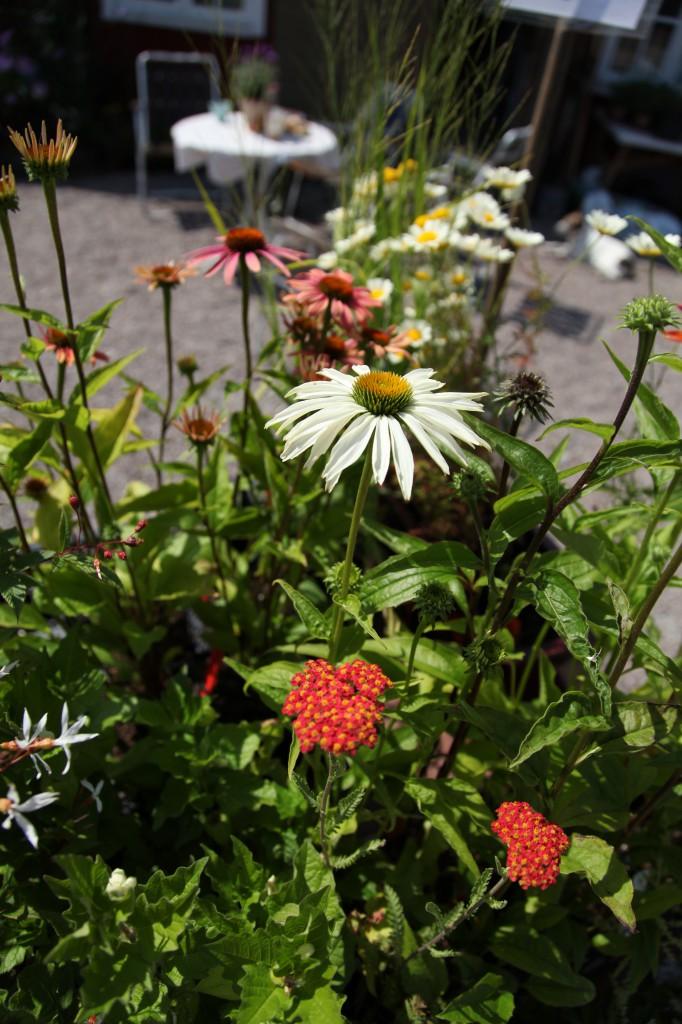 smedjans trädgård