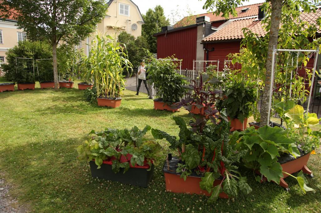 Stadsodlingen i Västerås ©Ulrika Flodin Furås