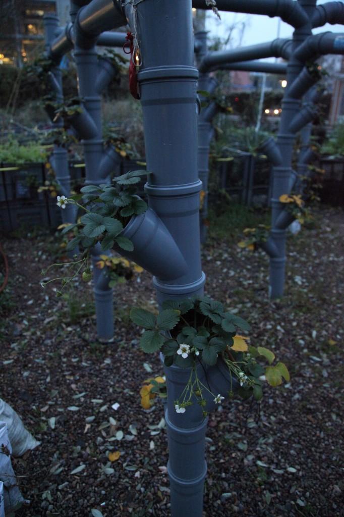 Prinzessinnengärten i december ©Ulrika Flodin Furås
