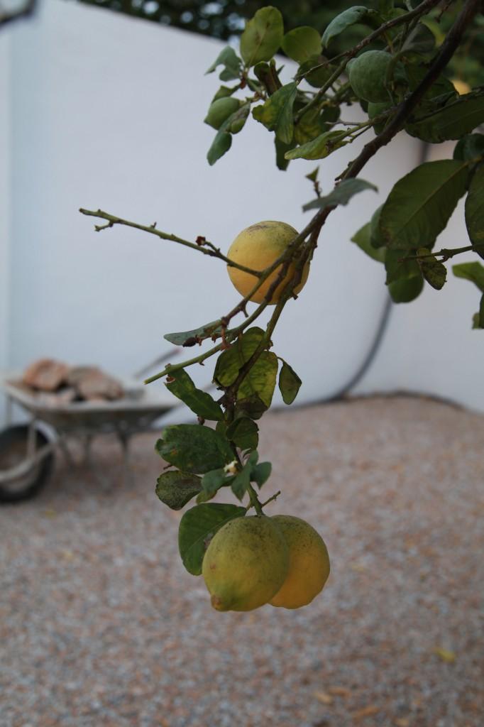 Citron ©Ulrika Flodin Furås