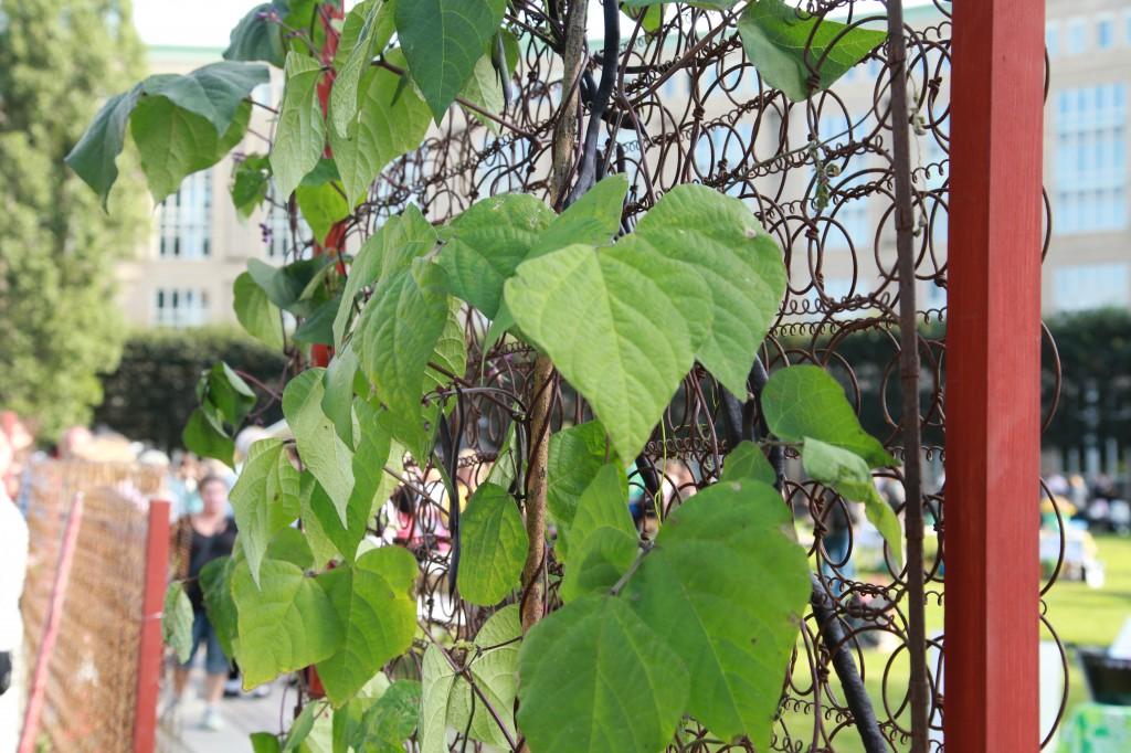 Stadsoldarefestivalen, vintervikens grovsoprumsträdgård ©Ulrika Flodin Furås