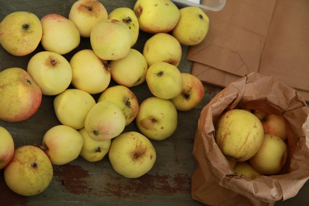 äpplen på stadsodlingsfestivalen ©Ulrika Flodin Furås