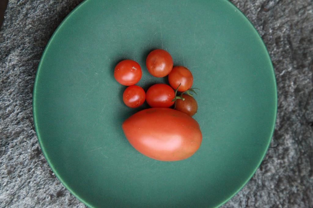novemberskörd av tomat ©Ulrika Flodin Furås