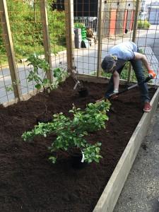 En man som planterar växter i en växtlåda