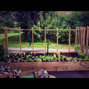 Ny planterad trädgård