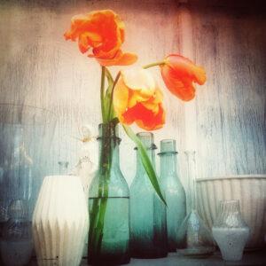 tulpan, rosendal iPhone ©Ulrika Flodin Furås