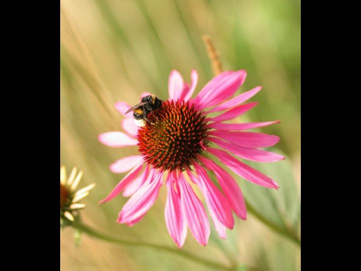pollinerarna ©Ulrika Flodin Furås