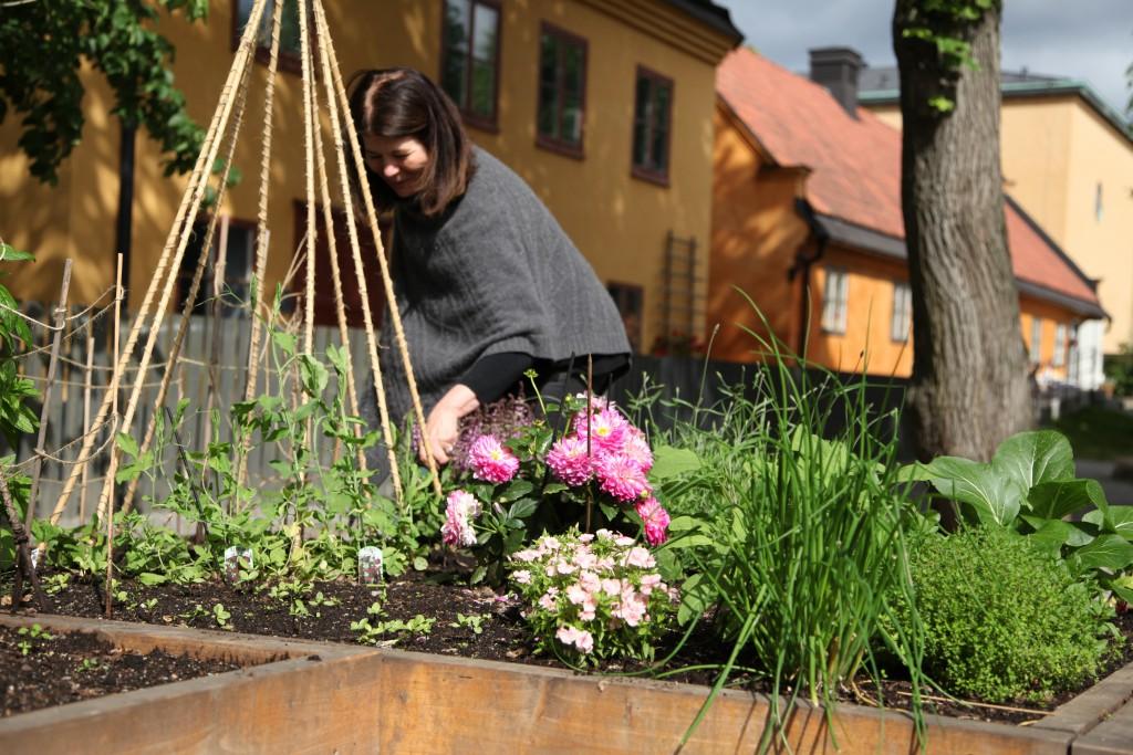 Krubbanodlingen ©Ulrika Flodin Furås