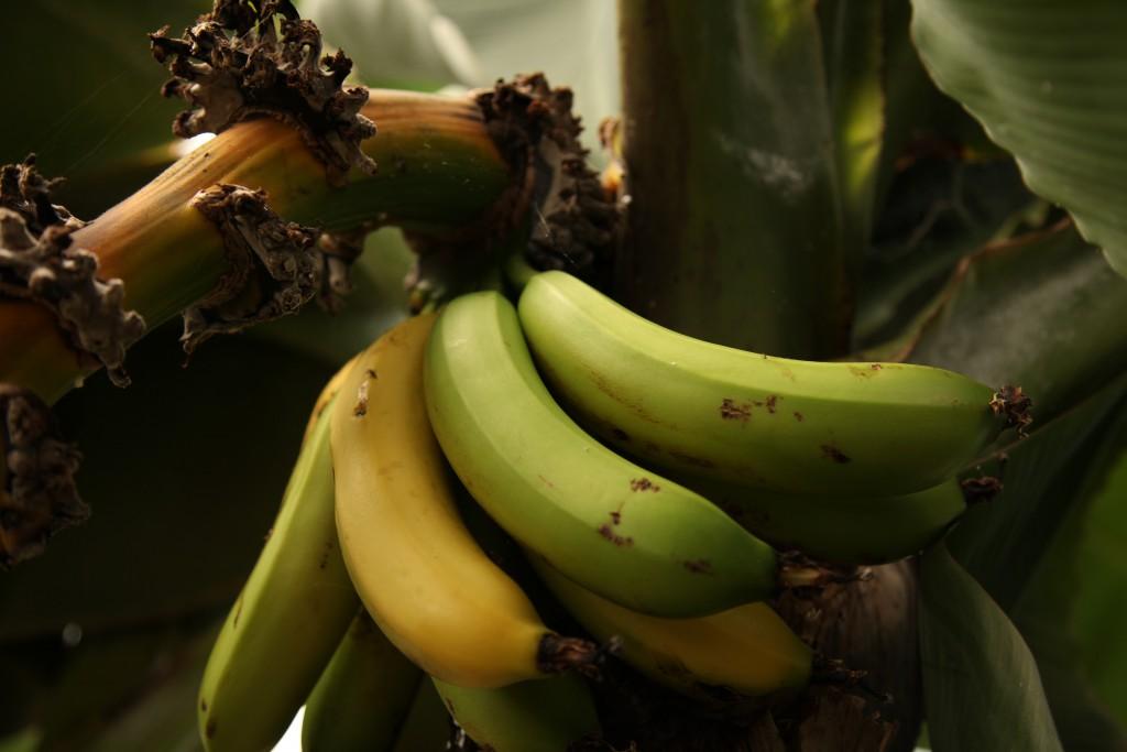 Banan ©Ulrika Flodin Furås