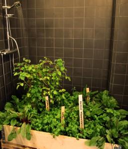 Växter på ikea, dessa växter är placerade i en dusch