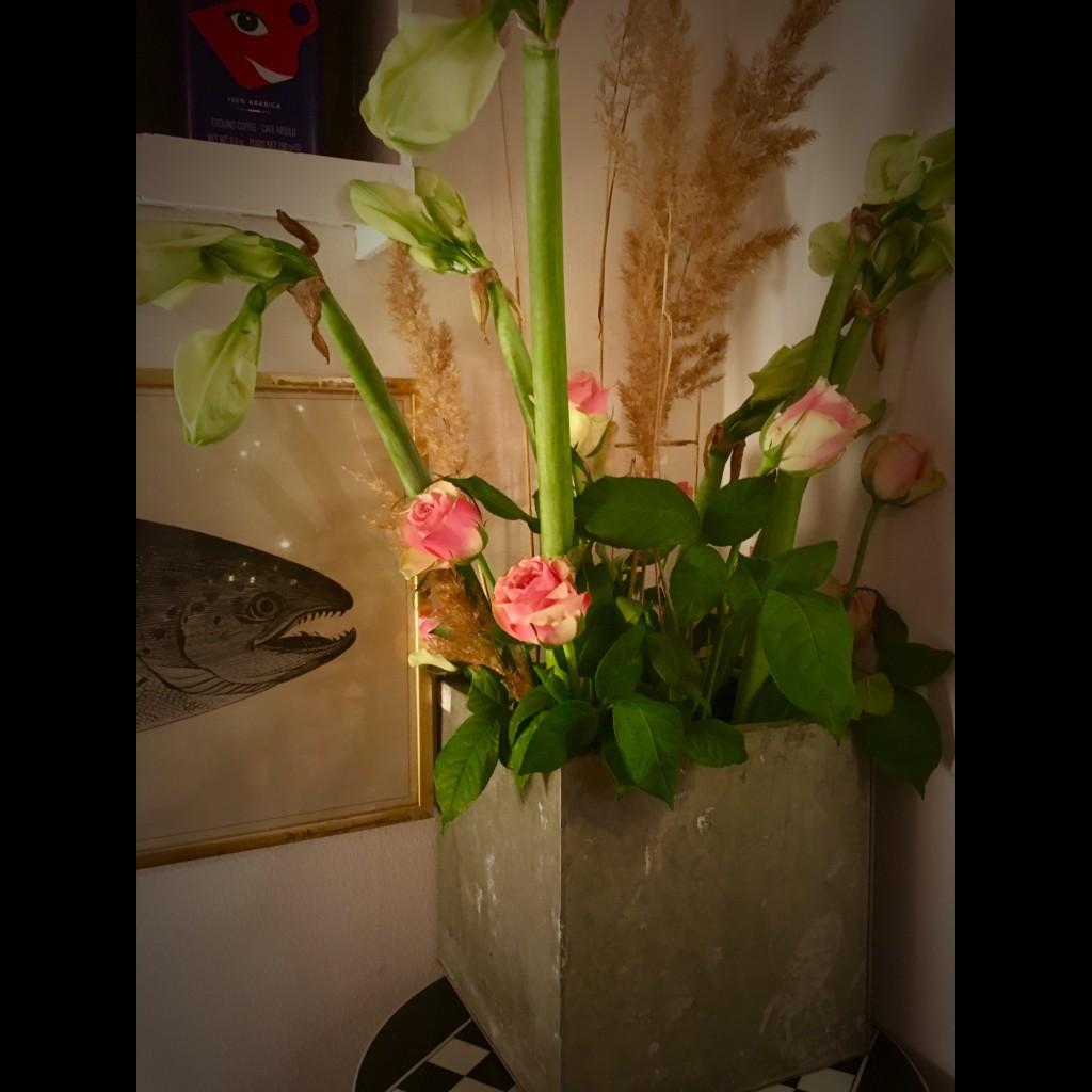 Amaryllis rosor iPhone Ulrika Flodin Furås