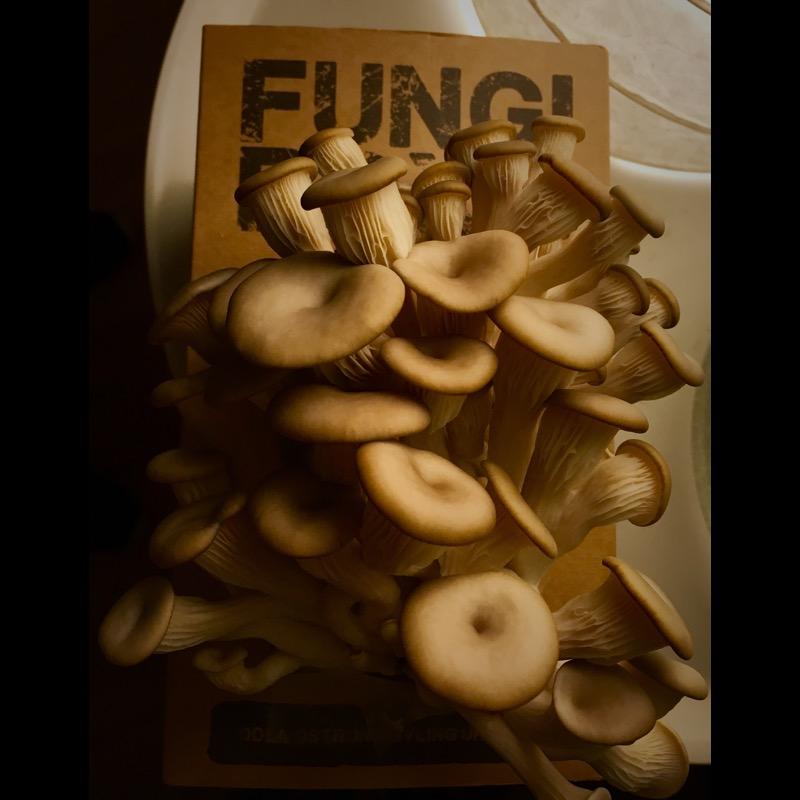 Fungibox Ulrika Flodin Furås
