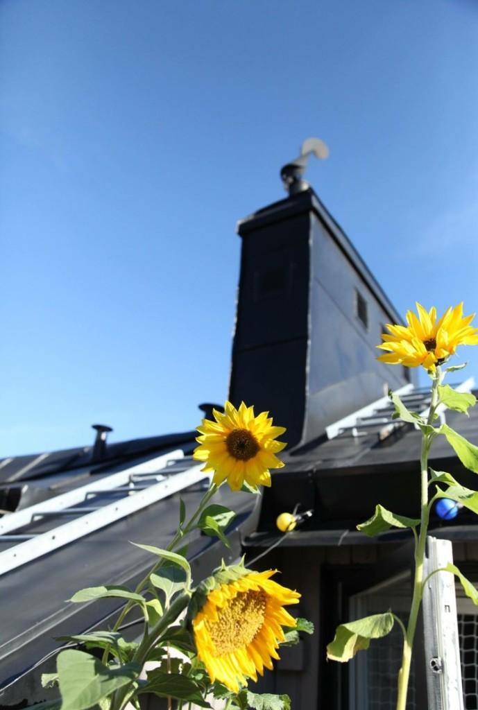 Solrosor på söder Ulrika Flodin Furås