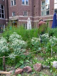 En man som vandrar runt i en blomstrande trädgård
