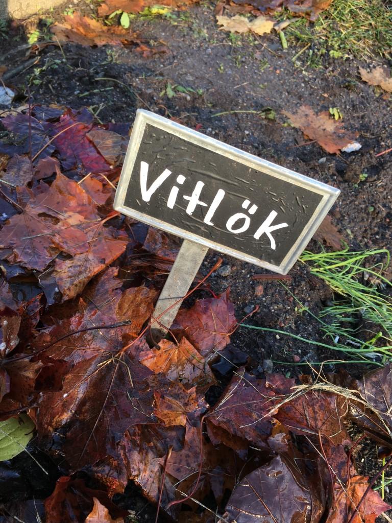 Löv ovanpå vitlökslandet©Ulrika Flodin Furås