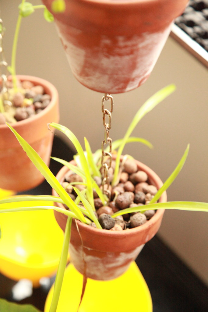 Istället för jord används till exempel lecakulor ©Ulrika Flodin Furås