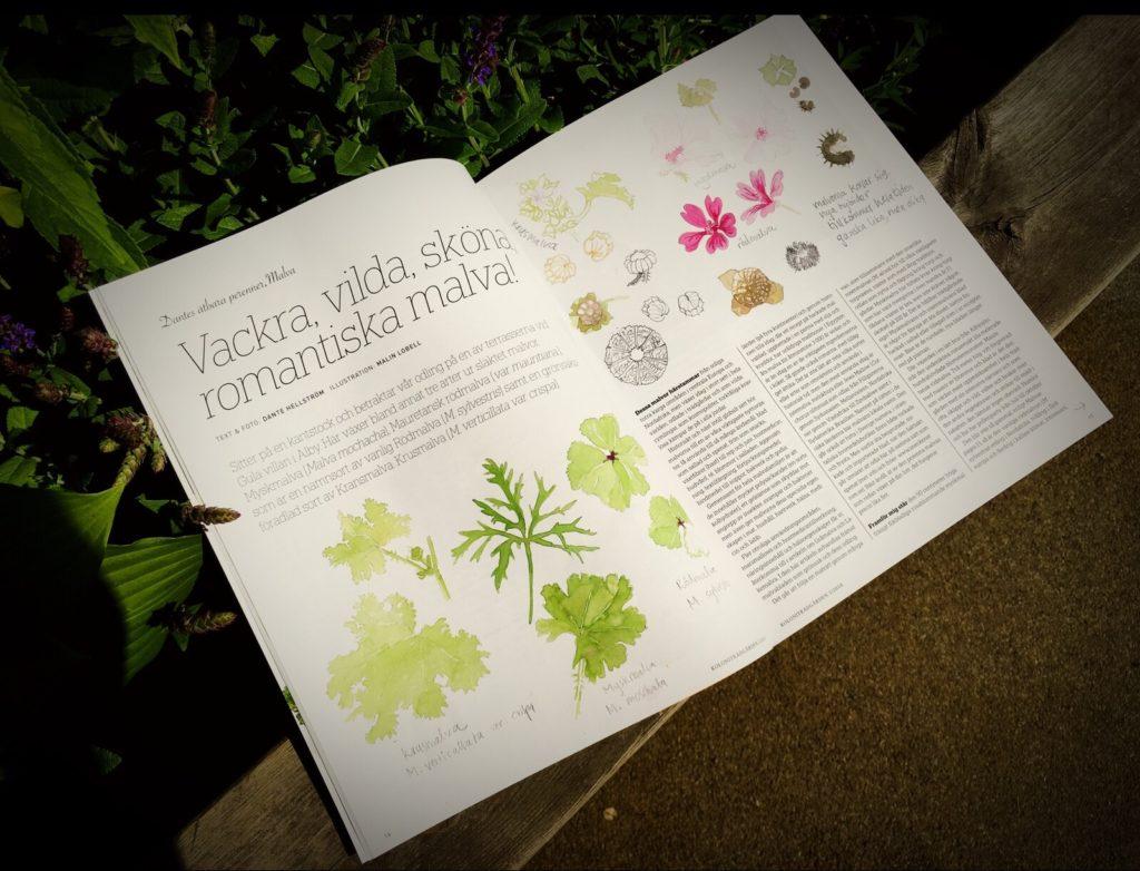 En bok som ligger uppslagen, den visar olika blom illustrationer