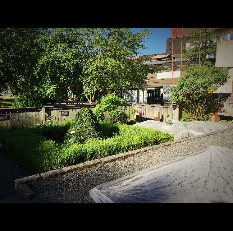Vasaträdgården tillhörande vasamuseet under konstruktion