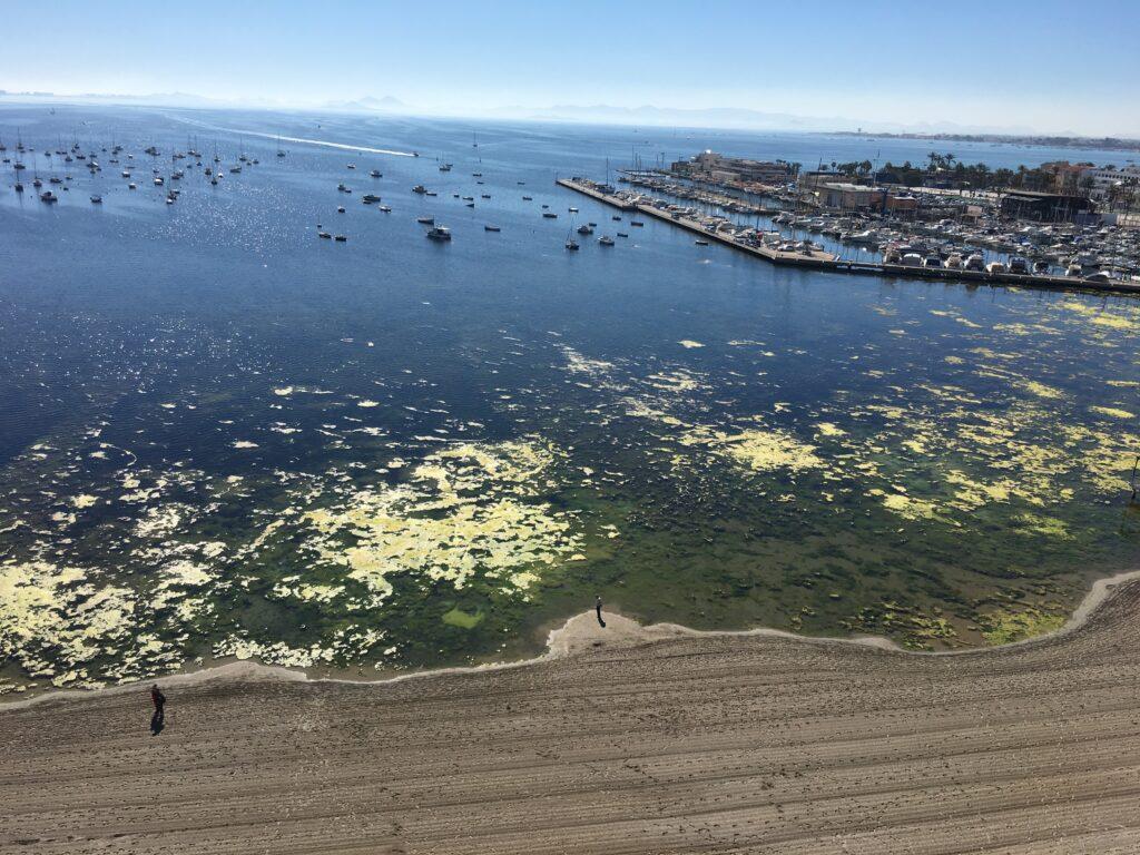 algas en el Mar Menor algaes in Mar Menor