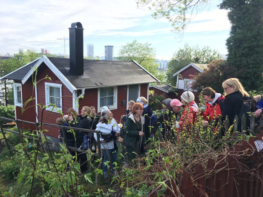 Vandring i koloniträdgårdarna i Tantolunden. Gatsmart
