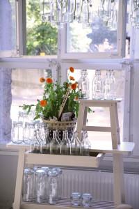 En stor ringblomma som står i ett fönster, omgiven utav vaser