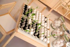 Äggkartong som används som en kruka