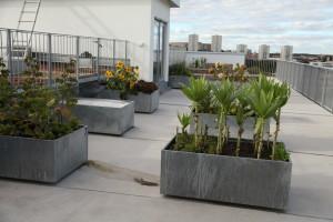 Blommor och träd på en takträdgård