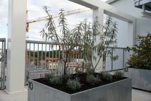 Träd på en takträdgård
