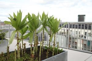 Planotor på en takträdgård