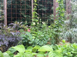 Spritmuseumets trädgård i full blomster