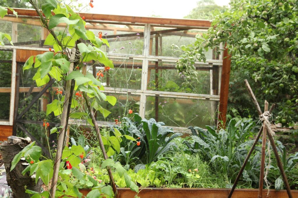 Ett hemagjort växthus