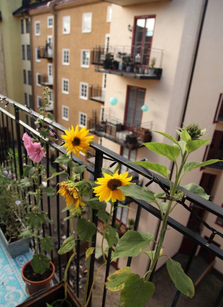 Solros balkong