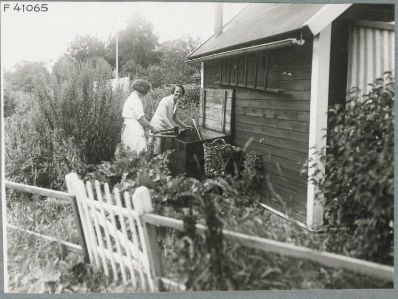 trädgårds historia
