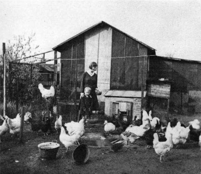 Seidlungen-trädgård med höns, Berlin 1920-tal