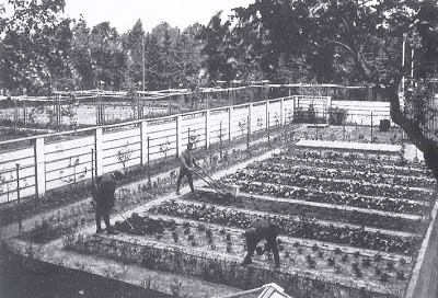 Leberecht Migge, en Siedlungen-trädgård vars yta motsvarar en familjs behov för att bli självförsörjande.