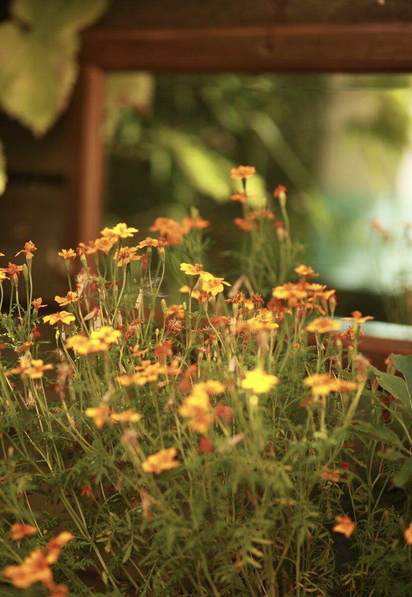 gula små blommor