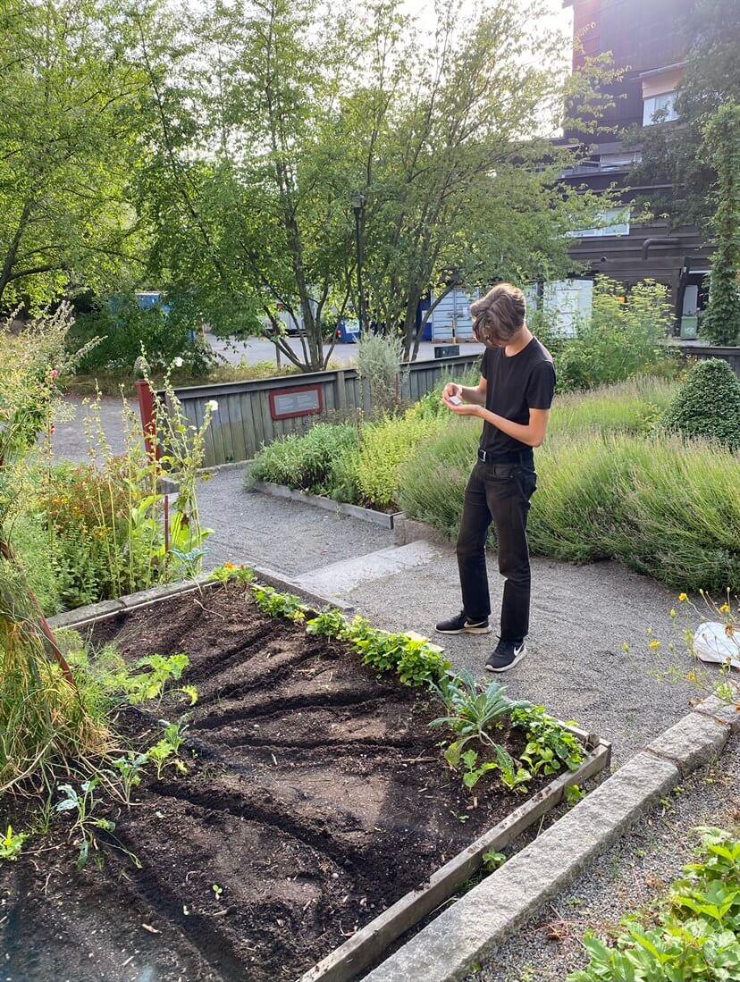 Linus hjälper till vid vasa trädgården