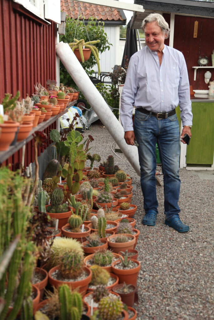 Kaktusar på kolonilotten