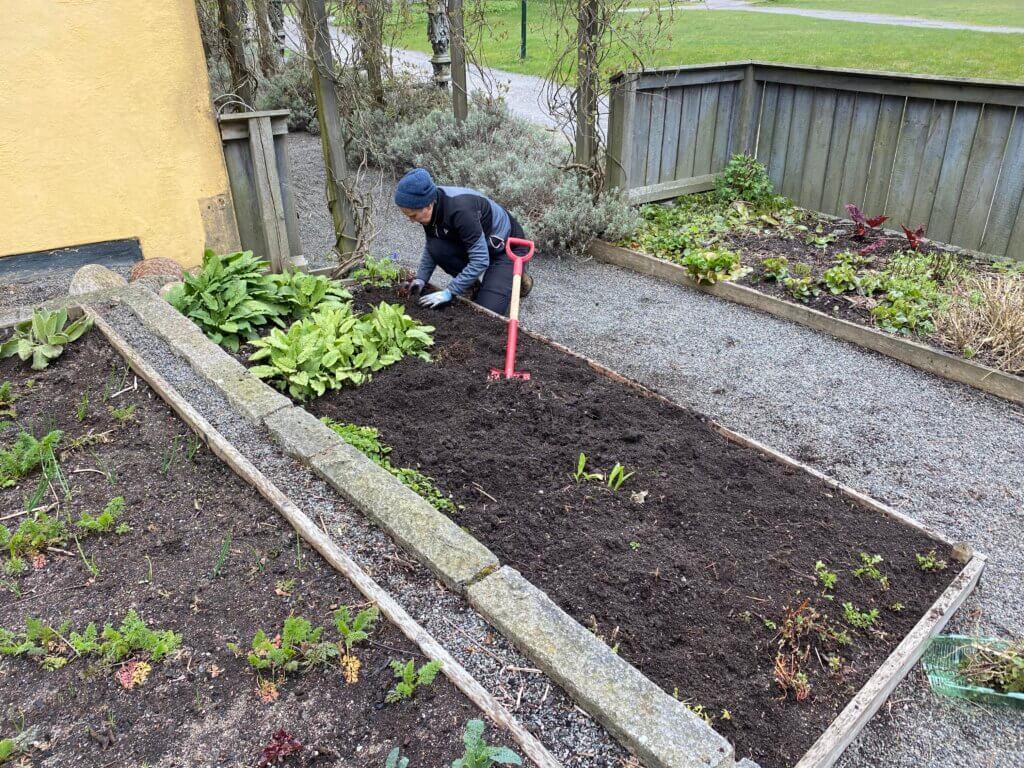 Vårbruk i Vasamuseets trädgård