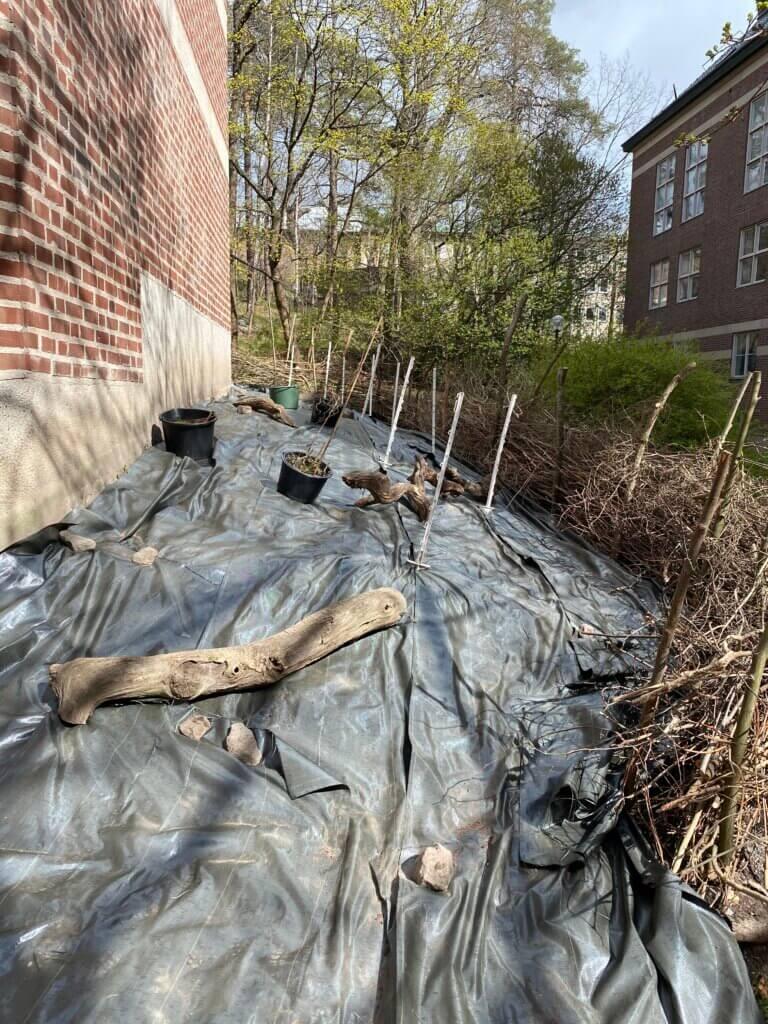 Nedbrytbar markduk skyddar mot ogräs som kirskål